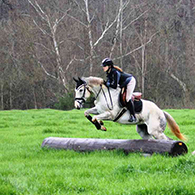 Sport Law & Equestrian