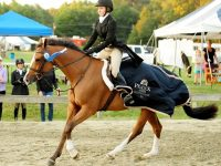 Equestrian and Sport Law